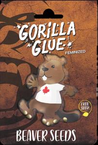 gorilla glue canada